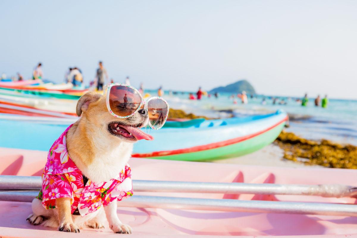 """Vacaciones con perros: Barcelona, Costa Brava y Almería, los destinos con más turistas """"peludetes"""""""