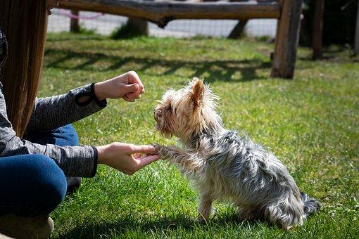 Educación y Adiestramiento para perros