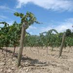 BOLET ORGANIC WINES